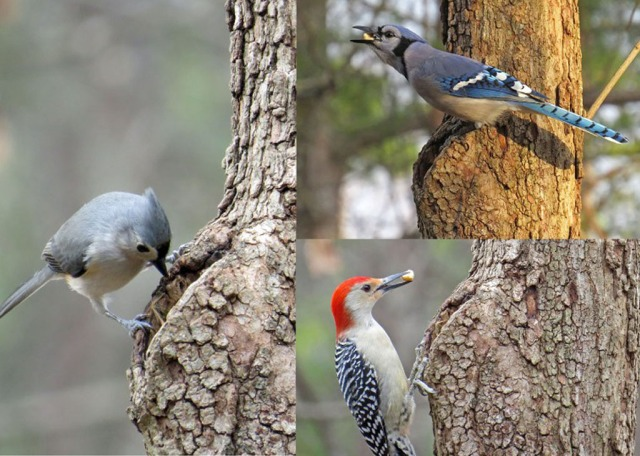 And here are a few birds that stopped by to investigate.