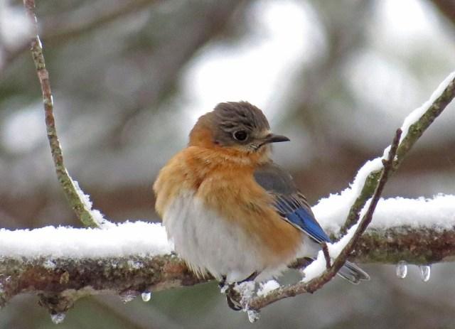 bluebird213