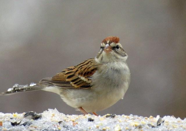 sparrow212