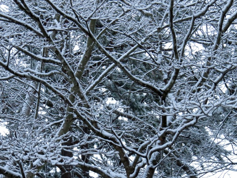 winterbranches213