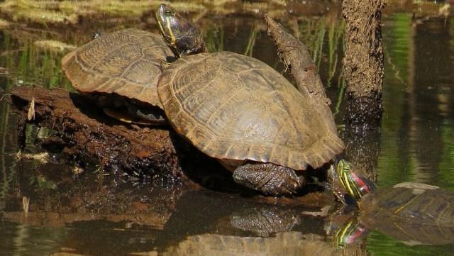 turtles424