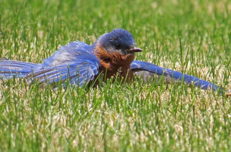 bluebird522