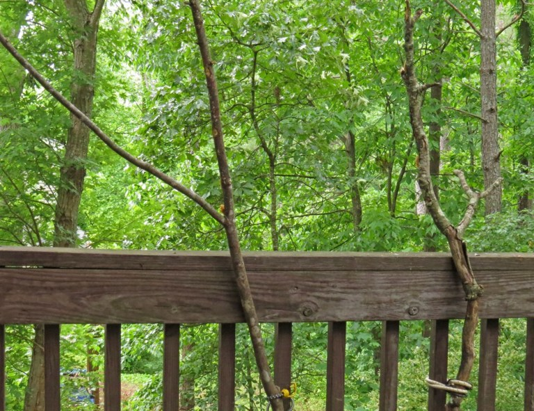 Branches strapped to my deck with bungee cords - the part you don't see in pictures!