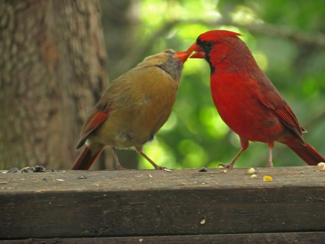 cardinals503