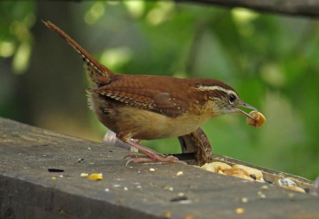 Bringing Birds to Your Backyard - Day One | Backyard Bird Nerd