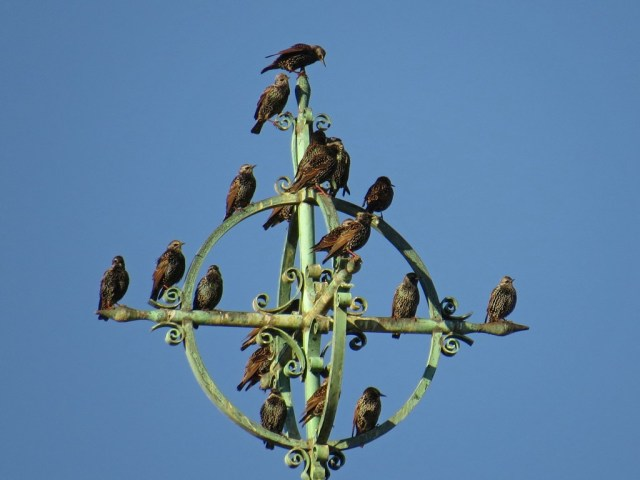 The castle is not only home to students, it is also a Purple Martin palace.