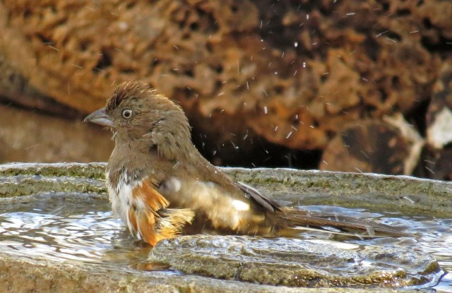 femaletowhee1