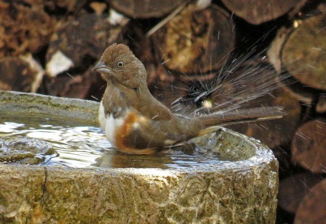 femaletowhee4