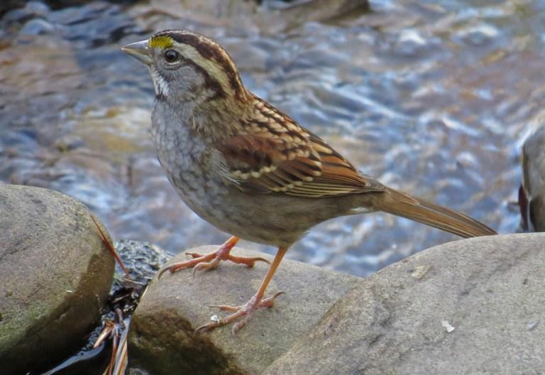 sparrow8