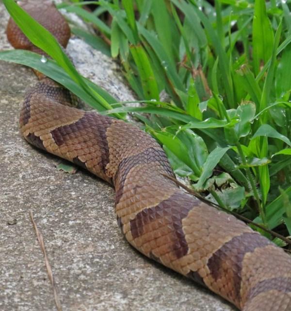 snake2