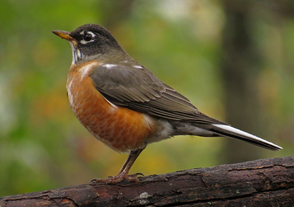 Feathers, Foliage, and the Colors of Fall | Backyard Bird Nerd