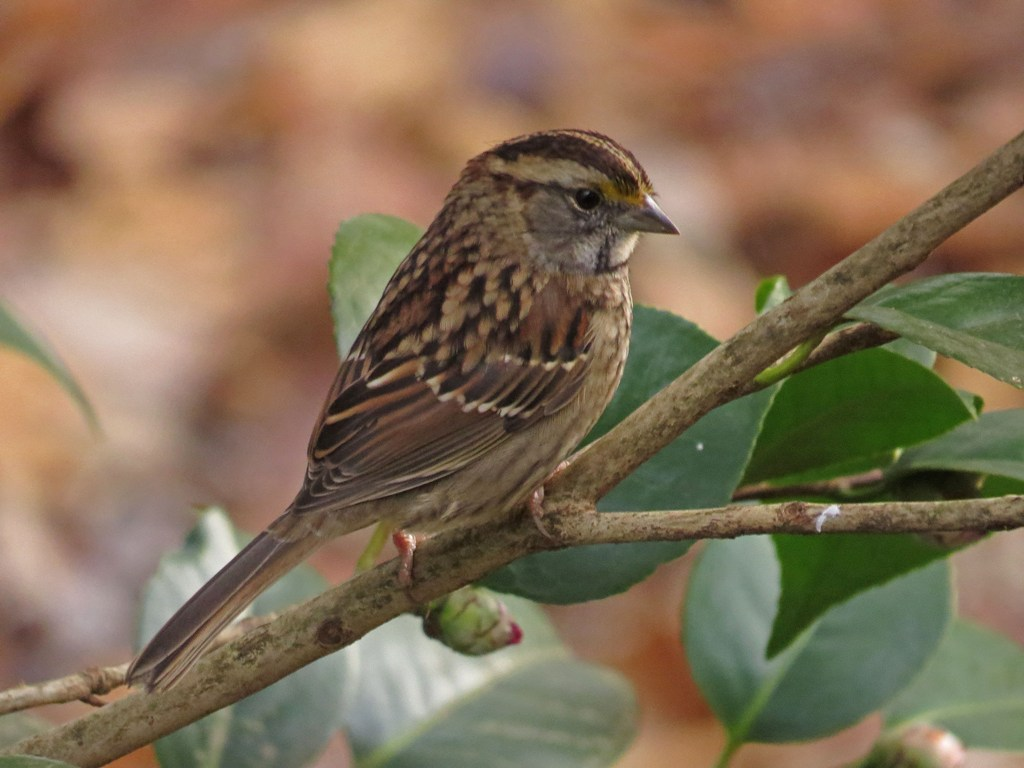 backyard christmas carolers backyard bird nerd