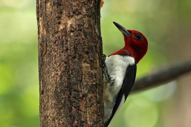 redheadw2