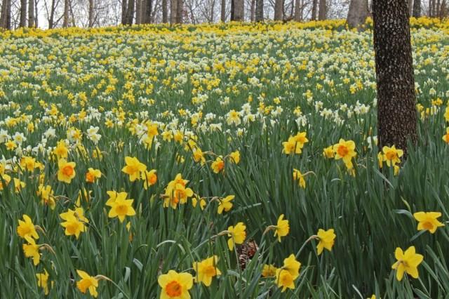 flowerfield1