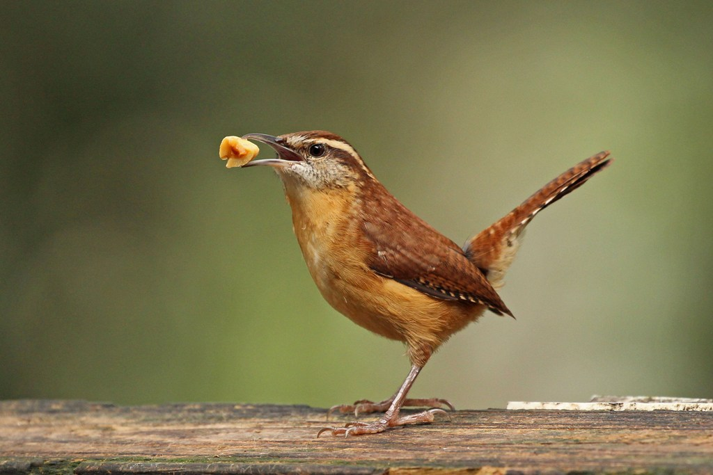 Image result for consider the birds of the air